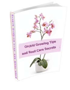 Orchid growing Tips and Root Care Secrets