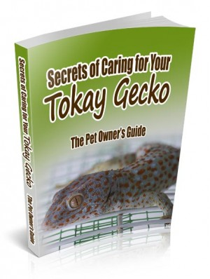 Tokay Gecko Lizard Care Information