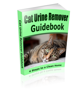 How To Get Rid Of Cat Urine Stains & Odor From Your Home