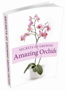 Secrets Of Growing Amazing Orchids