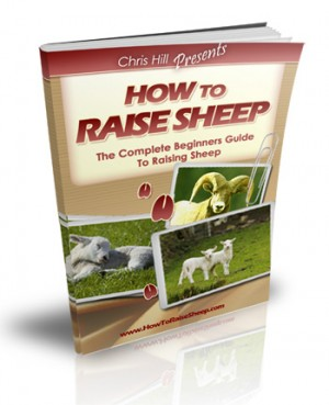 The Complete Beginners Guide To Raising Sheep