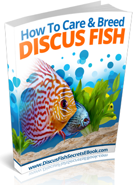 How To Care & Breed - Discus Fish