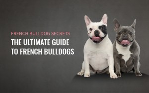 French Bulldog Secrets Download